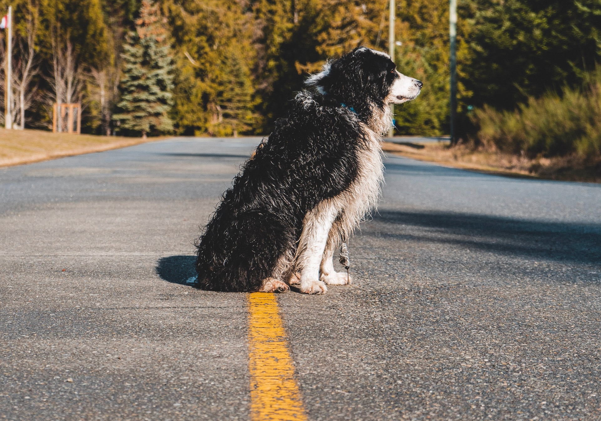 dog sitting in middle of a road, example of leading lines used in photography