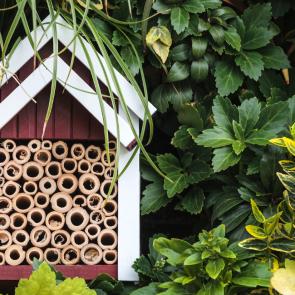 Build 'Garden Haven' for Wildlife Photographers